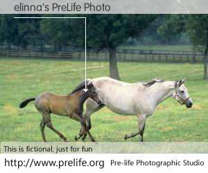 elinna's PreLife Photo