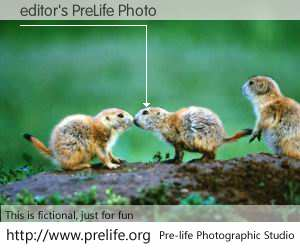 editor's PreLife Photo