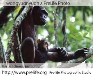 wangyuanyuan's PreLife Photo