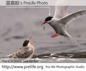 温嘉毅's PreLife Photo