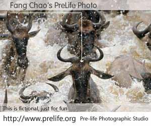 Fang Chao's PreLife Photo
