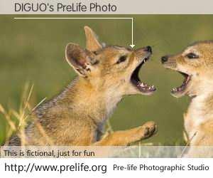 DIGUO's PreLife Photo