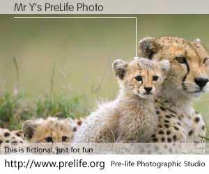 Mr Y's PreLife Photo