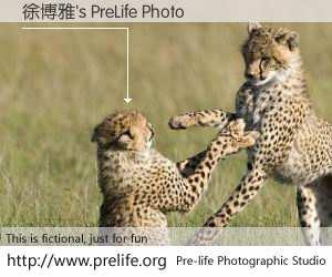 徐博雅's PreLife Photo