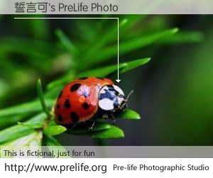 誓言可's PreLife Photo