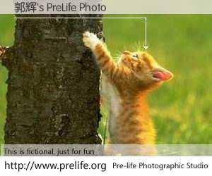 郭辉's PreLife Photo