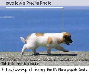 swallow's PreLife Photo