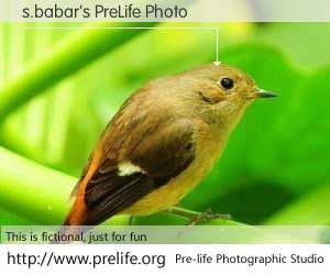 s.babar's PreLife Photo