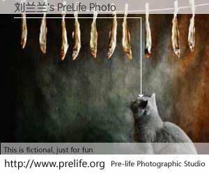 刘兰兰's PreLife Photo