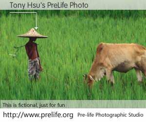 Tony Hsu's PreLife Photo