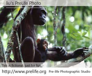 liu's PreLife Photo