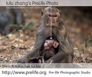 lulu zhang's PreLife Photo