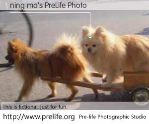 ning ma's PreLife Photo