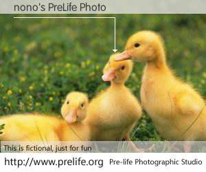 nono's PreLife Photo