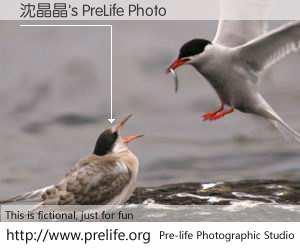 沈晶晶's PreLife Photo