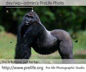 dev/wp-admin's PreLife Photo