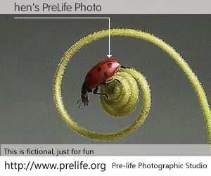 hen's PreLife Photo